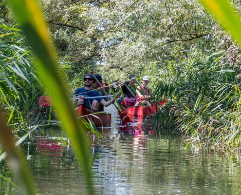 Kom in de herfstvakantie mee kanoën door de kreken in de Biesbosch (Bas Wetter)
